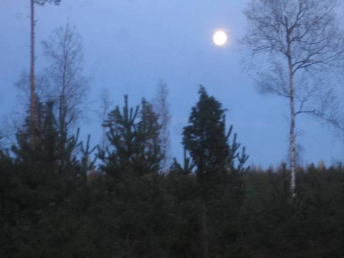 Si se quiera regresar en tiempo, tiene que salir más temprano. Una luna llena sobre el bosque.