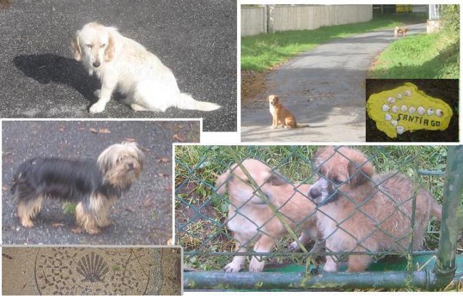 Perros y perritos en Galicia